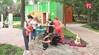 В парке Толстого прошла выставка бездомных животных