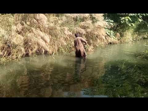 Fish hunting fishing in pakistan indus river 2017