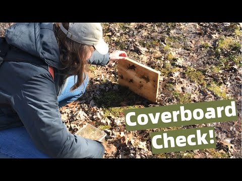 Vernal Pool Coverboard Monitoring at Stella Niagara Education Park