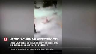 Глава СК России Бастрыкин поручил проверить информацию о девочках живодерках