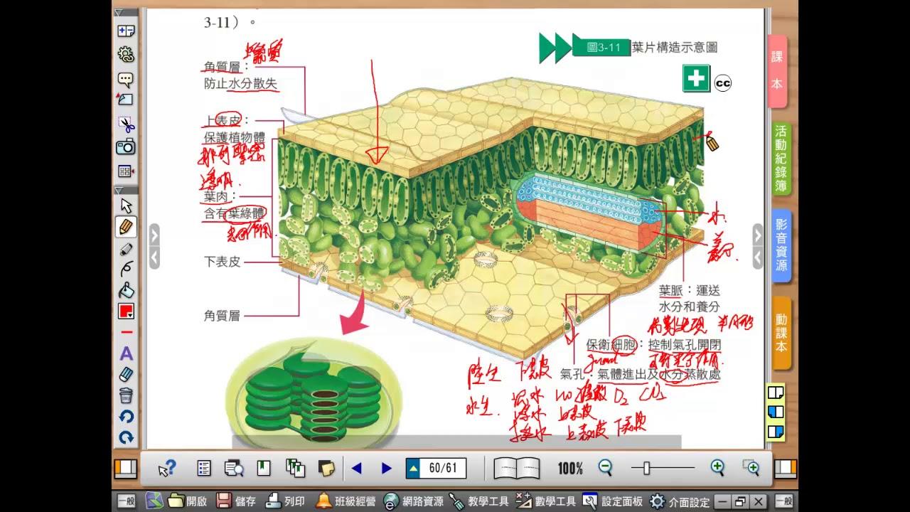 生物線上教室 康軒版 上冊 3-3-1葉的構造 - YouTube