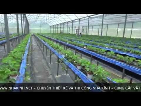 Nhà kính trồng rau sạch