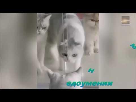 Вопрос: Почему кошки с легкостью могут пролезть куда угодно?