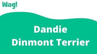 Dandie Dinmont Terrier | Wag!