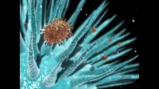 Man Made Viruses as Bio-NanoTechnology (how this new virus works)