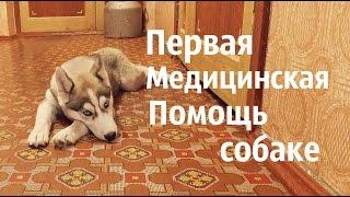Первая Медицинская Помощь собаке. Что делать, если ......