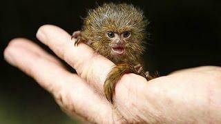 10 Самых маленьких животных в мире. Кузница Фактов.