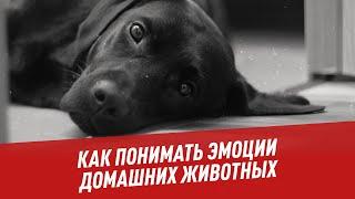Как понимать эмоции домашних животных - Хочу всё знать