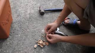 水蜜桃、櫻桃、楊梅種子破殼教學