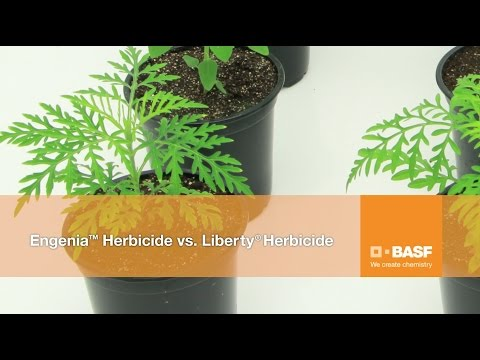 Engenia® Herbicide vs. Liberty® Herbicide