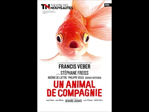 Un animal de compagnie th tre des nouveaut s youtube - Animal de compagnie appartement ...