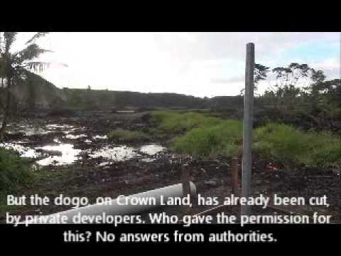Fiji mangroves being destroyed for urban development 7 Dec 2012