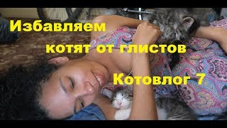 Влог котят 7. Как безопасно избавить кошку и котят от глистов. Наш опыт, отзывы и рекомендации
