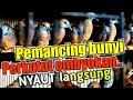 Suara Perkutut Ombyokan Cocok Untuk Pancingan Bunyi Perkutut Malas  Mp3 - Mp4 Download