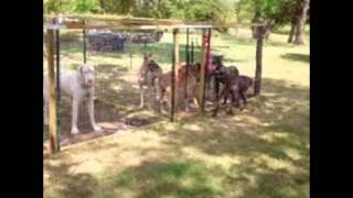 Great Dane Kennels