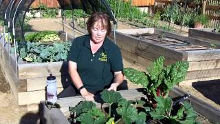 Gardening Power To The People: Tips for a Healthy Vegetable Garden