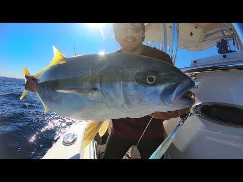 Crazy Deep Water Jigging For Winter Kingfish Sydney - Vertical Jigging Madness - Fishing Australia