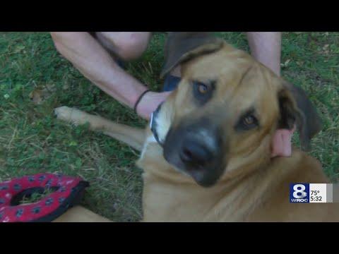 The Morning Rush - Hero dog saves child during diabetes emergency
