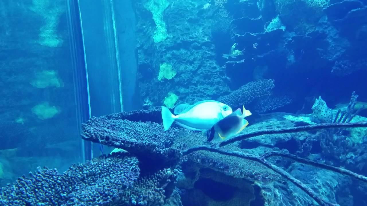 Aquarium At Salt Water Grill Panama City Beach Fl