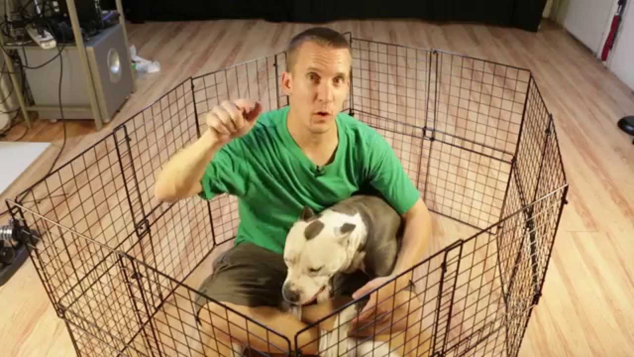 How to build a cheap diy temporary dog playpen youtube for Cheap indoor play areas