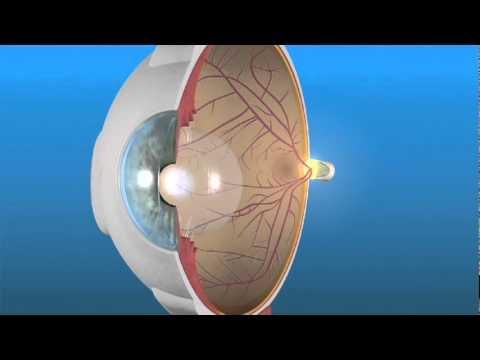 Cómo Funciona el Ojo y la Retina