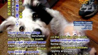 Chaser The Canine Knows The Names Of Over 1,000 Toys