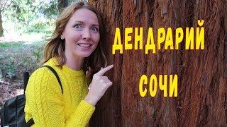 дендрарий в Сочи .  Райский уголок России