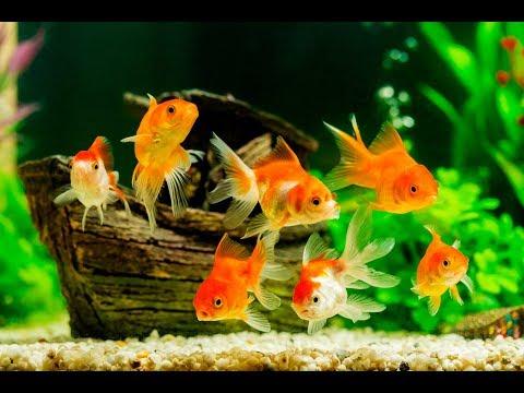 Fish Order Unboxing $1500 : Goldfish, Cichlids, Guppy Fish, Plecos, Betta Fish, Plants For Fish Room