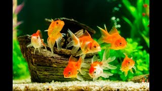 $1500 Fish Unboxing 🐟 Goldfish, Cichlids, Guppy Fish, Pleocs, Betta Fish, Plants, Danios