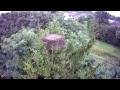 Bocian Frampol – Stork's nest