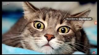 Почему кошкам нельзя смотреть в глаза факт открыт