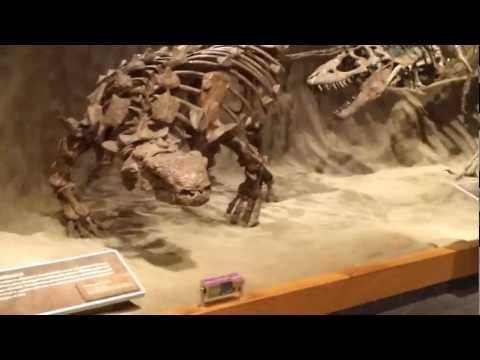 Tour of the Royal Tyrrell Museum