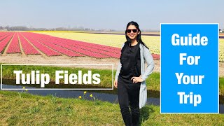 Guide for planning Trip To Amazing Tulip Fields of Holland   Keukenhof      Amsterdam