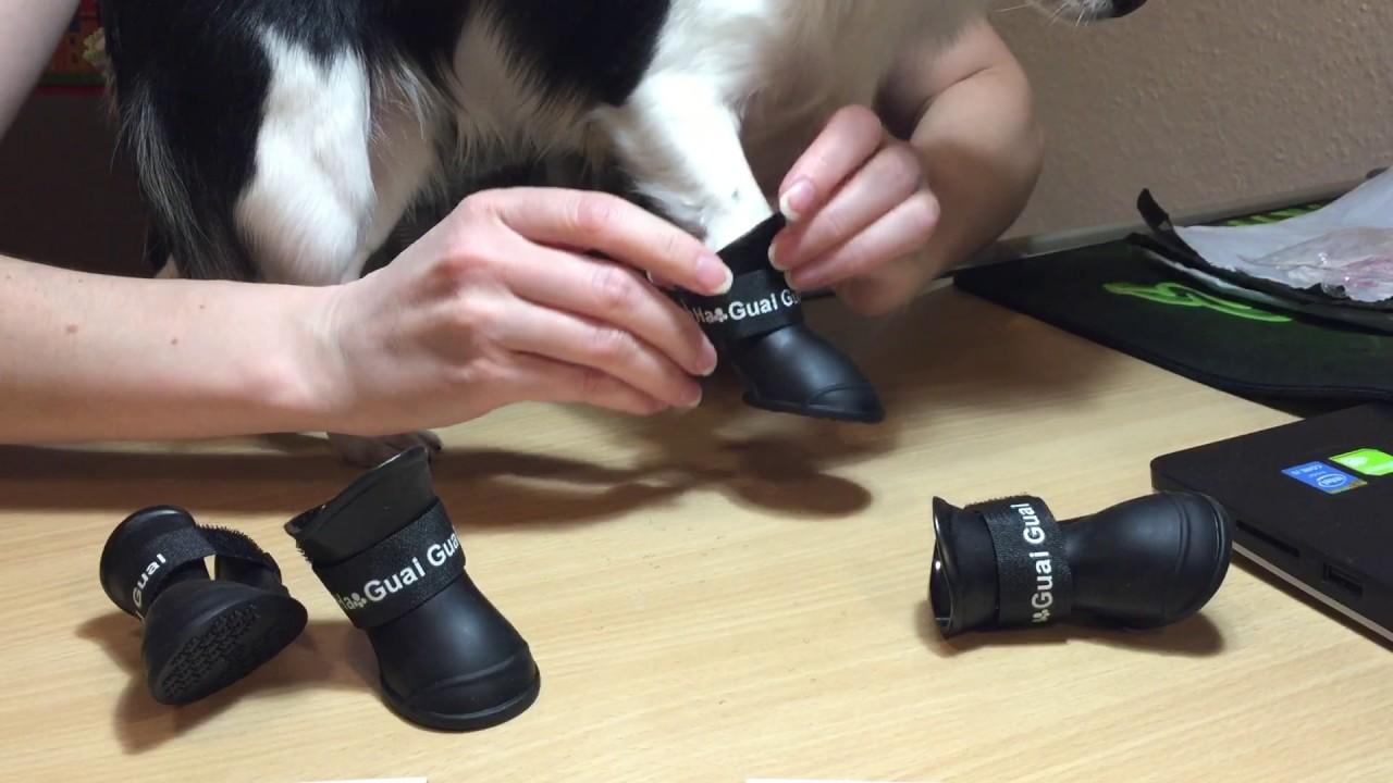 Резиновые сапожки для собак (той-терьер) (aliexpress) - YouTube