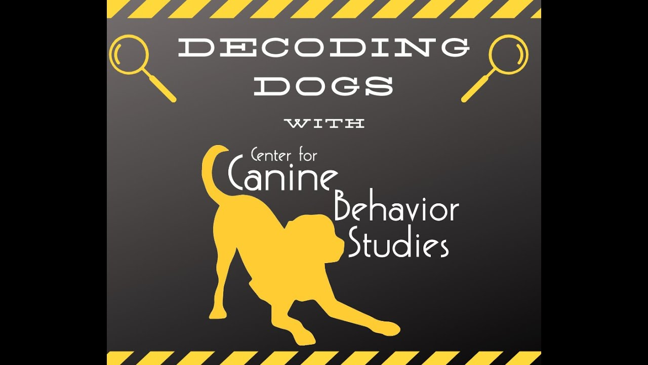 Decoding Dogs: Light/Shadow Chasing