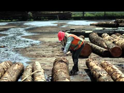 History of the Forest Industry in BC - the first Women as Log Scalers