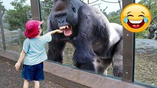 Я Ржал До Слез😂 Приколы / Смешные Видео / Смешные видео животные и люди / смешные животные