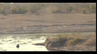 Звуки природы Африки