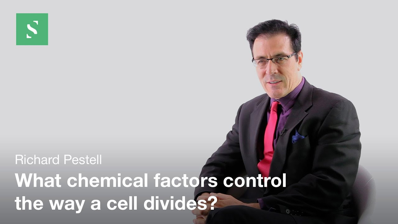 Cell Cycle and Cancer - Richard Pestell