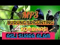 Suara Burung Srigunting Asli Alam  Mp3 - Mp4 Download
