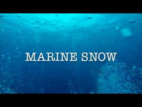 Marine Snow PV 2016short