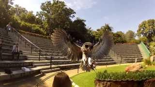 Unique Encounter at Taronga Zoo's Free Flight Bird Show