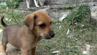 Naayi Mari - Puppies - Hundewelpen