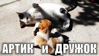 Коты против собак Смешные коты и собаки:) Артик и Дружок играют