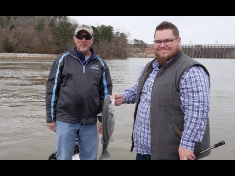 Striped Bass On The Chattahoochee River Tight Line Tv