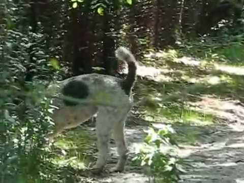Parti Standard Poodle Puppy At Frick Park Nine Mile Run Watershed Trail In Pittsburgh Pa