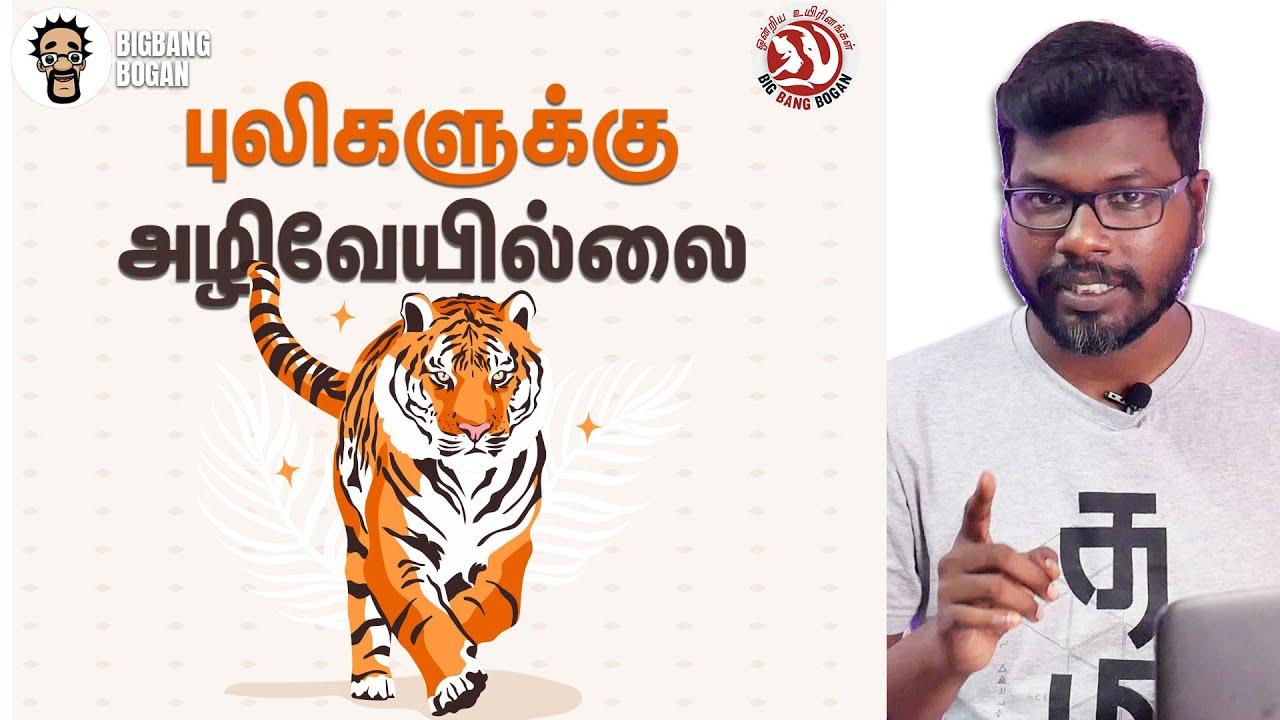 Download புலிகளுக்கு அழிவேயில்லை | Facts about Tigers|BigBang Bogan