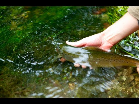 Fly Fishing UK Chalk Streams - The River Avon | Wilderness TV