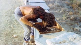 Мужика окружили пчелы,Прикол!!