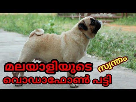 പഗ്ഗിനെ അറിയാം/ pug dog
